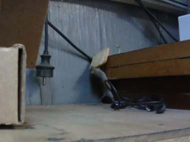 大きなクッキーを見つけたネズミは「諦めない!」 猫の動画 ねこわん!
