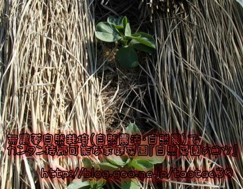 竹内さんの畑
