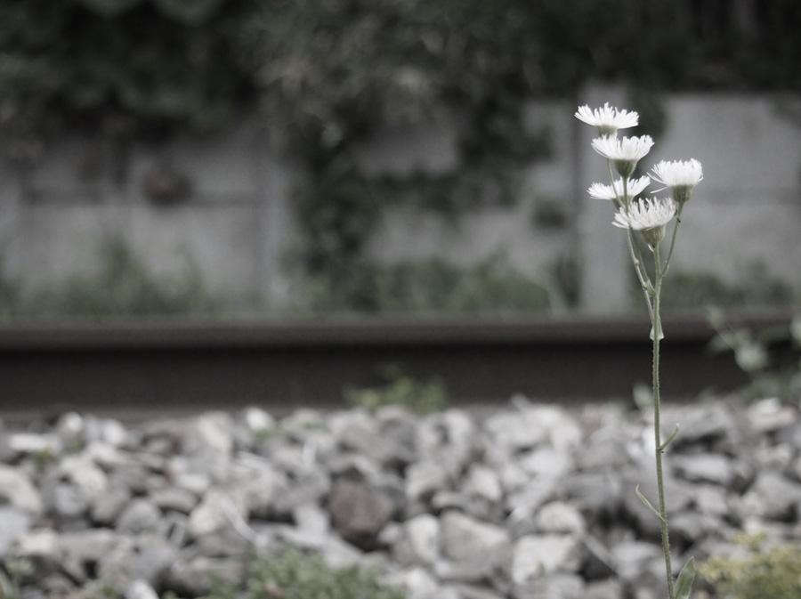 P5111505_edited-1.jpg