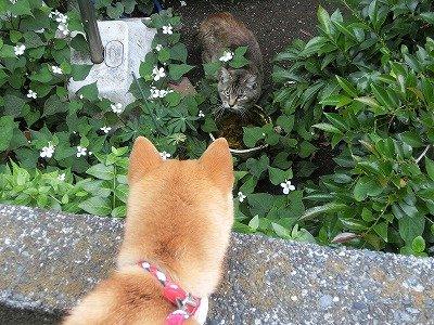 ネコさんお友達になろうよ!