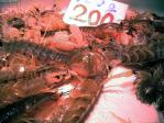 Mantis_shrimp_200yen.jpg