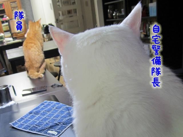 131110_19.jpg