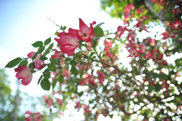 逆光FLOWER