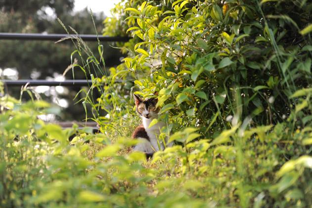 叢と三毛猫