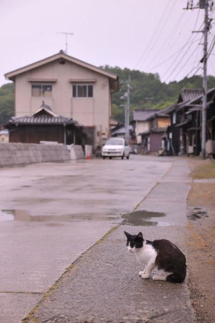 第一島猫発見