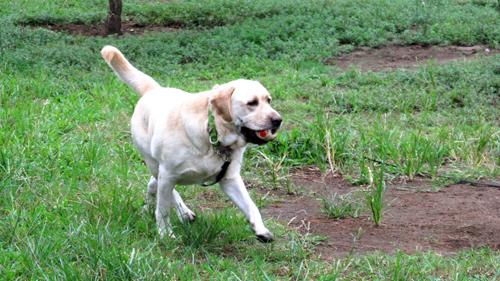 公園で遊ぶ犬
