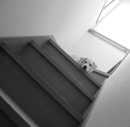 また2階にあがってる。
