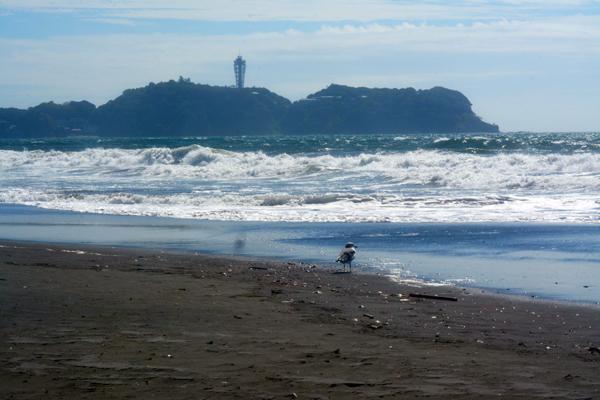 江ノ島とカモメ