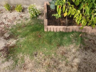 手作り花壇のそばの芝生