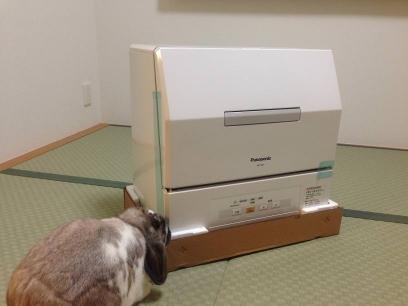 20131103001_そらと食洗機