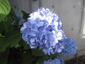 IMG_5694-201305.jpg