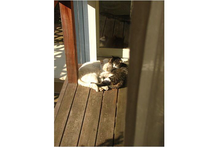 ウッドデッキに子猫が日向ぼっこ