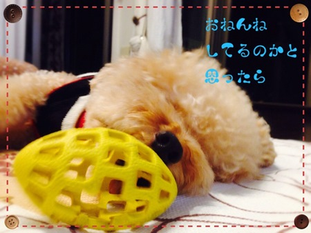 20140920 IMG_5115