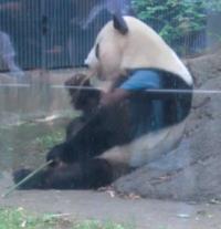 20130601上野動物園1_convert_20130602112259