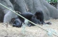 20130601上野動物園2_convert_20130602112325