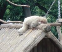 20130601上野動物園4_convert_20130602112413