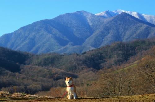雪山と柴犬(クリック拡大)