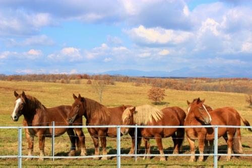 ばん馬の団体さん