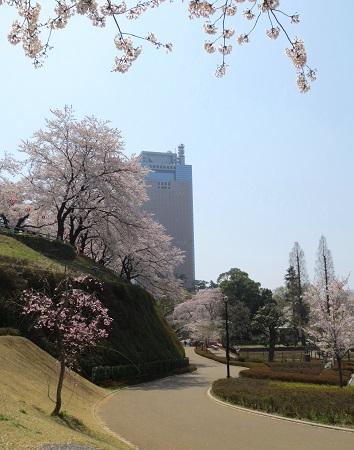 038県庁、桜
