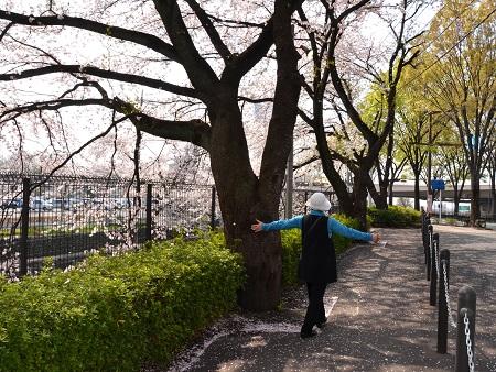 コピー (1) ~ 007桜吹雪