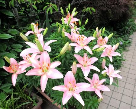 002ゆりの花