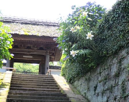 030鎌倉、アジサイ、山百合