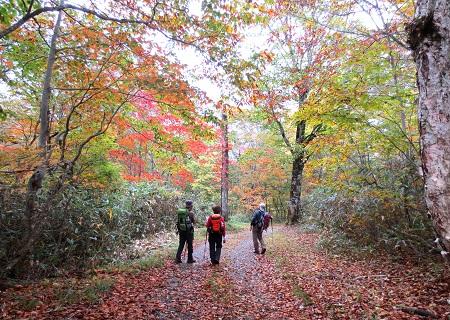 073落ち葉の道