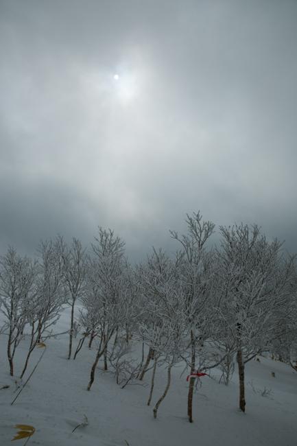 shiraoidake230140125-4487.jpg