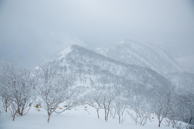 shiraoidake230140125-4491.jpg