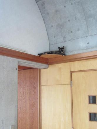 猫台の蘭①
