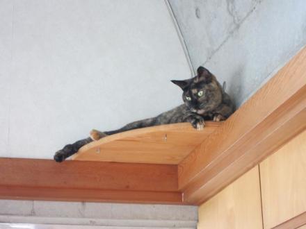 猫台の蘭④