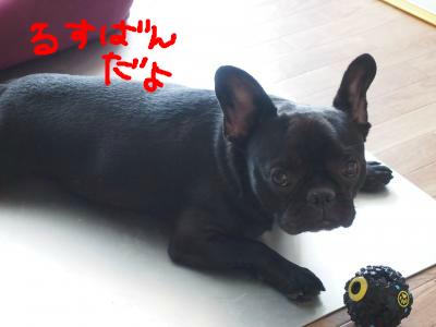 snap_sumonatsushippo_20139013502.jpg
