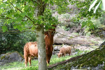 フロムのキリン牛2013702