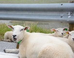 羊君2013723