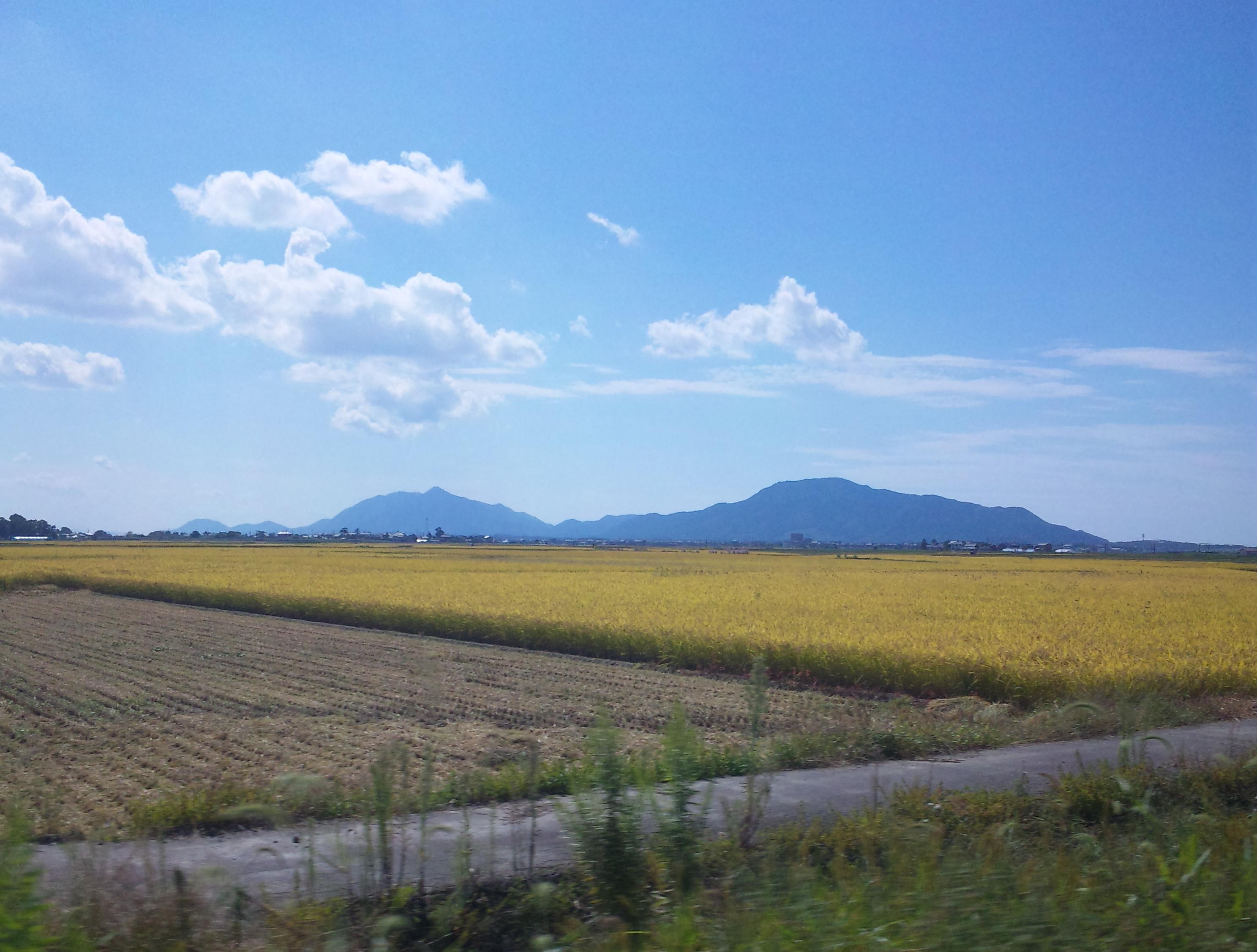 稲刈の始まった田んぼ