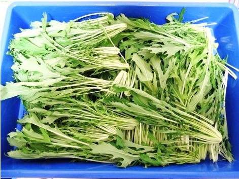 水菜乾燥前