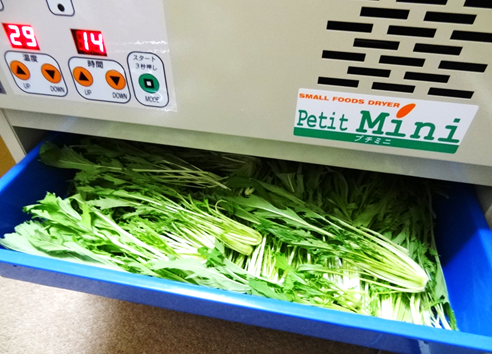 水菜を乾燥機に投入