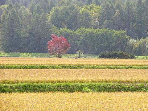 14 9/28 里山紅葉 姫リンゴ