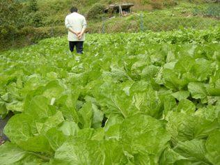 13.10.19 白菜・大根畑