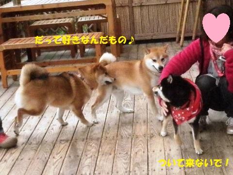 三匹仲良く3