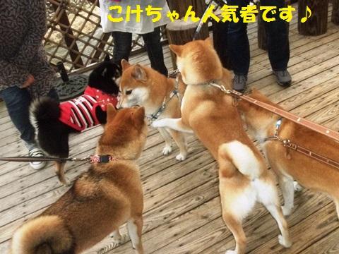 こけちゃん人気者