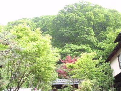 楽しく学べる人生という旅-midori