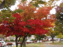 楽しく学べる人生という旅-suwako1
