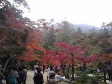 楽しく学べる人生という旅-miyajimamomijidani2
