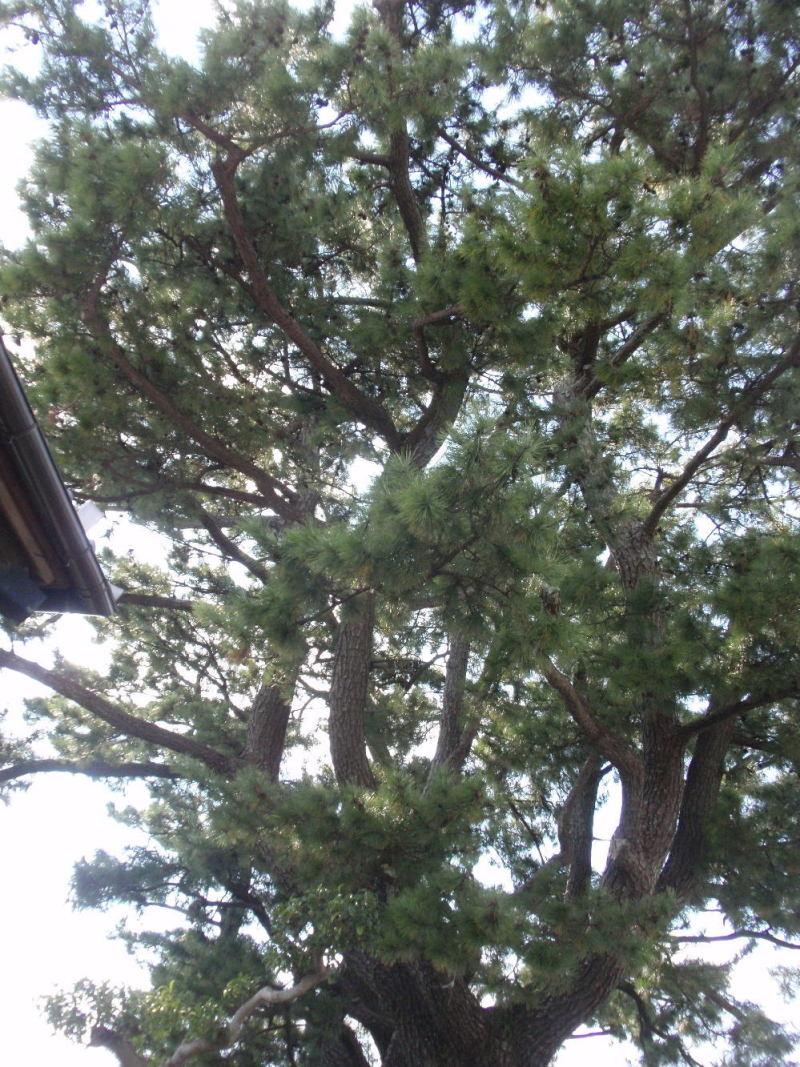 楽しく学べる人生という旅-awannojyuurobei1