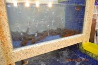新冠洲活海鮮のクルマエビ140126