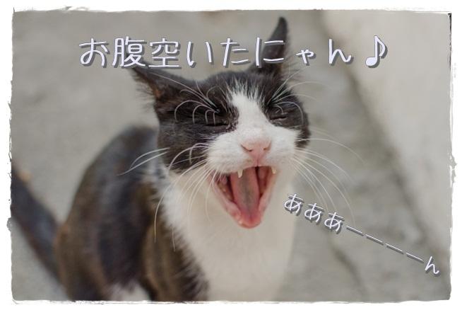 TAI_7133.jpg