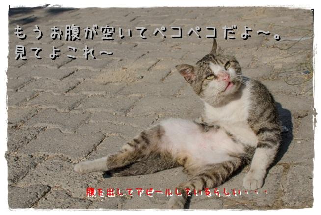 TAI_7279.jpg
