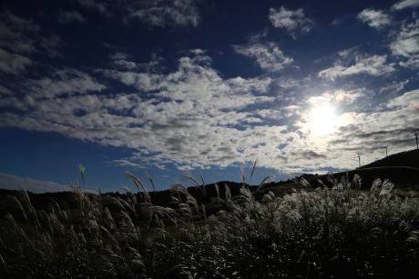 細野高原 すすきの海