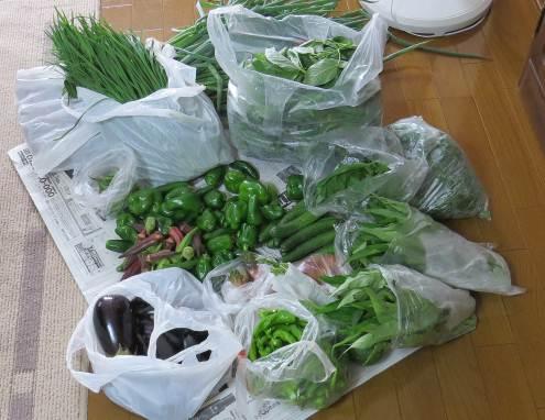 無農薬野菜の収穫物